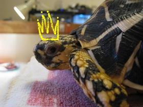 女王様.JPG